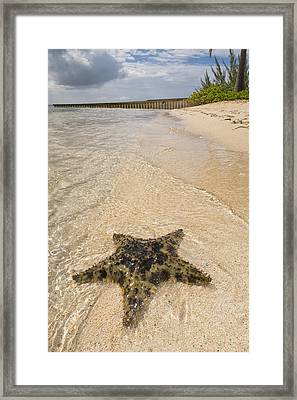 Starfish On The Beach At Starfish Point Framed Print