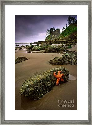 Starfish On The Rocks Framed Print by Inge Johnsson