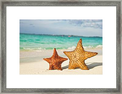 Starfish On Tropical Caribbean Beach Framed Print by Mehmed Zelkovic