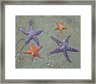 Framed Print featuring the photograph Starfish Party by 'REA' Gallery