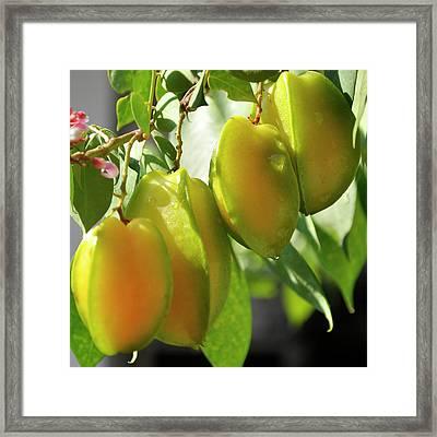 Starfruit 2 Framed Print by Nhi Ho Thi Xuan
