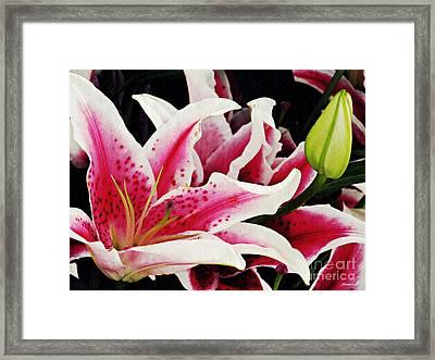 Stargazer Lilies Framed Print by Sarah Loft