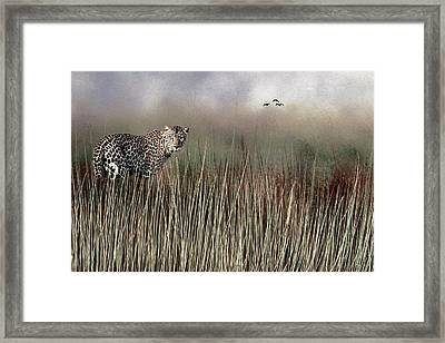 Framed Print featuring the photograph Staring Back by Diane Schuster