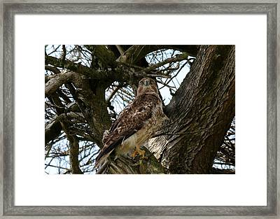 Framed Print featuring the photograph Staring Contest  by Christy Pooschke