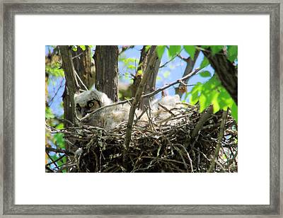 Staring From Its Nest Framed Print by Jeff Swan