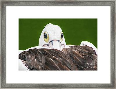 Framed Print featuring the digital art Staring Pelican by Ray Shiu