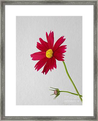 Stark Beauty Framed Print by Skip Willits
