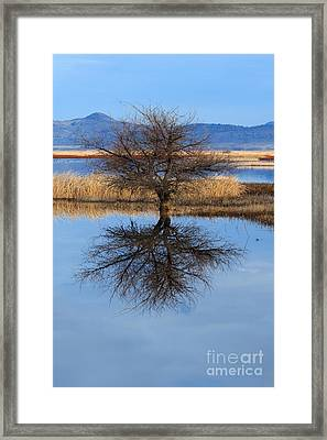 Stark Reflections Framed Print by Beve Brown-Clark Photography