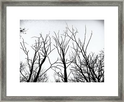 Stark Silhouettes Framed Print