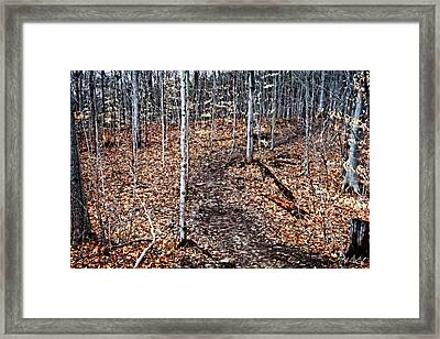 Starkey Hill Path Framed Print