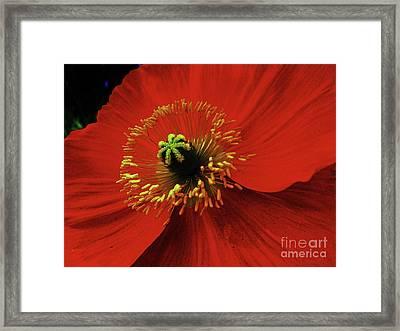 Starlet Framed Print by Daniele Smith