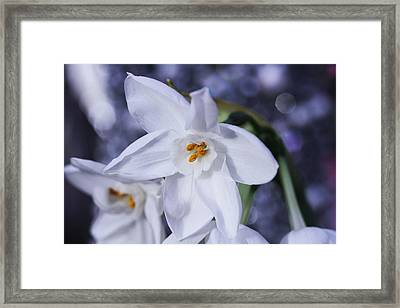 Starlight Framed Print by Connie Handscomb