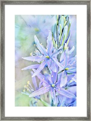 Starlight In The Meadow Framed Print by Connie Handscomb