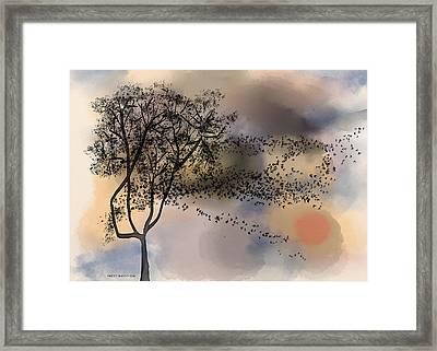 Starlings At Dusk Framed Print