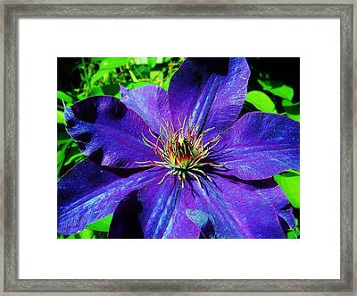 Framed Print featuring the photograph Starry Bloom by Susan Carella
