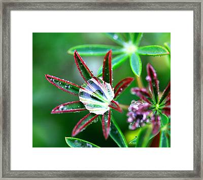 Starry Droplets Framed Print by Marie Jamieson