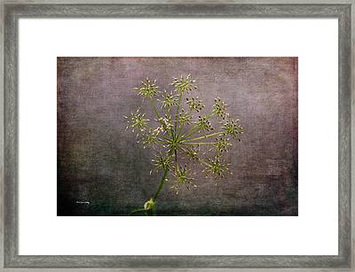 Framed Print featuring the photograph Starry Flower by Randi Grace Nilsberg