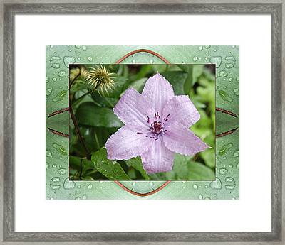 Framed Print featuring the photograph Starry Mauve by Bell And Todd