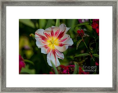 Starry Tulip Framed Print