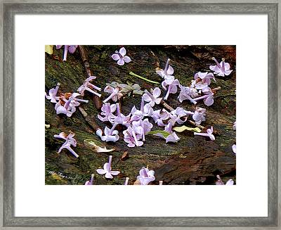 Stars Fell Down Framed Print by Wild Thing