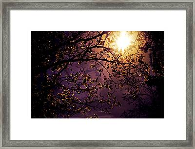 Stars In An Earthly Sky Framed Print by Vivienne Gucwa