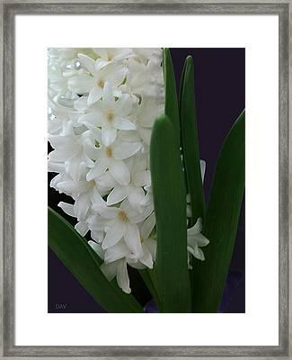 Stars Of Spring Framed Print by Debra     Vatalaro
