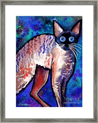 Startled Cornish Rex Cat Framed Print by Svetlana Novikova