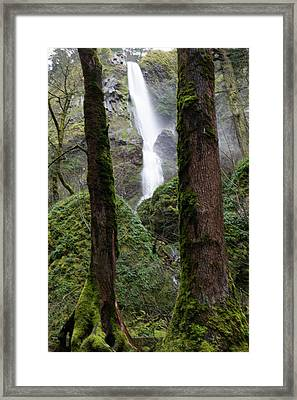 Starvation Creek Falls Between The Trees Framed Print by Jeff Swan
