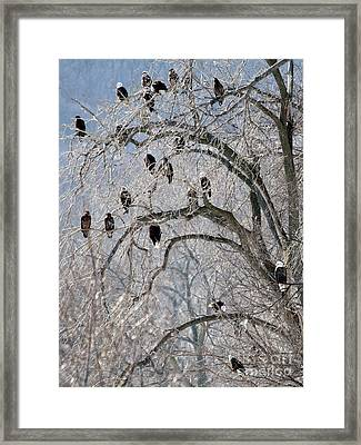 Framed Print featuring the photograph Starved Rock Eagles by Paula Guttilla