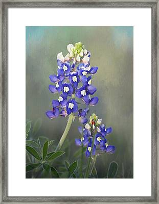 Framed Print featuring the photograph State Flower Of Texas by David and Carol Kelly