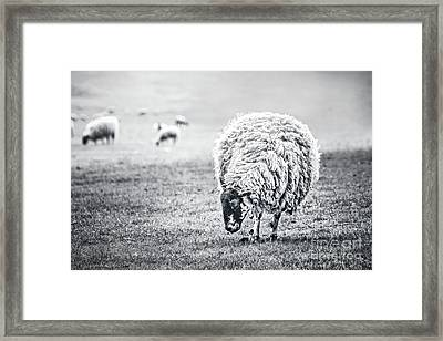 State Of Graze Framed Print