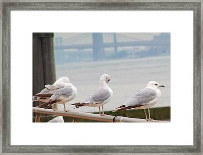 Statten Residents Framed Print by Vijay Sharon Govender
