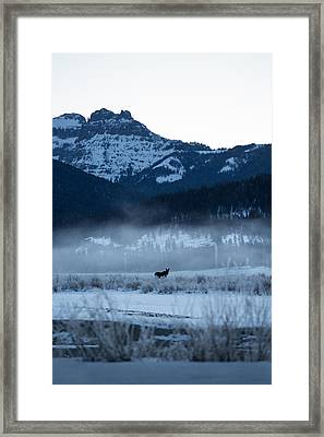 Statuesque Moose // Round Prairie, Yellowstone National Park Framed Print