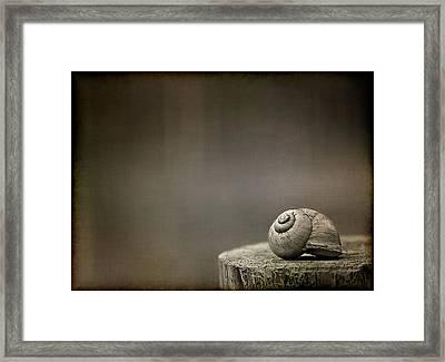 Stay Framed Print by Evelina Kremsdorf