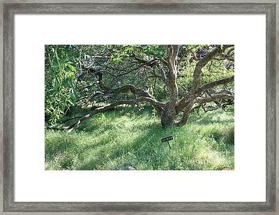 Stay On Path Framed Print by Carol Groenen