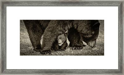Staying Close-sepia Framed Print