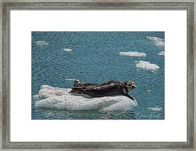 Staying Cool Framed Print