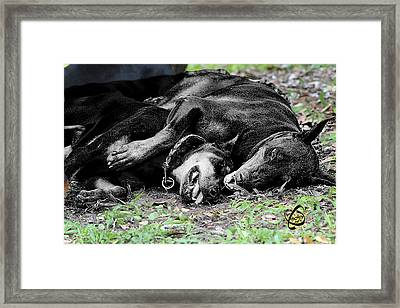 Dobermans, Family Lifestyle Framed Print by Maria C Martinez