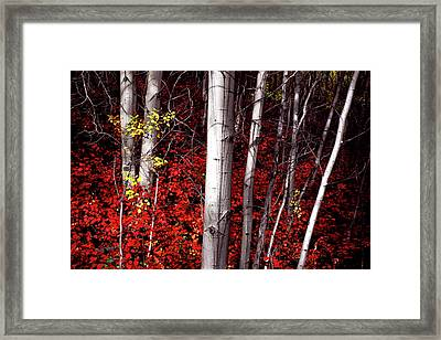 Stealing Beauty Framed Print