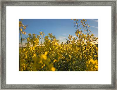 Stealthy Approach Framed Print by Chris Fletcher