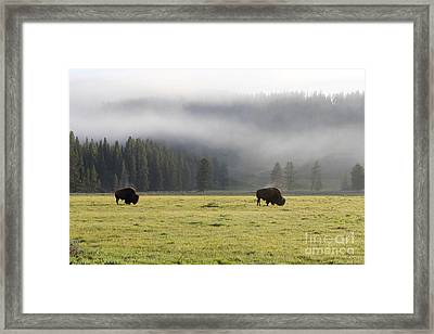 Steam On Bison In Yellowstone National Park Usa At Sun Framed Print by Adam Long