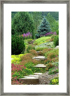 Steamboat Garden Path Framed Print by Peggy Dietz