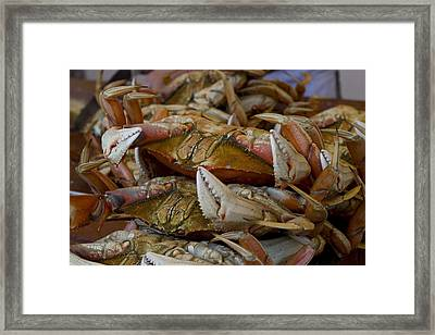 Steamed Crab Framed Print