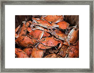 Steamed Crabs Framed Print by Brian Wallace