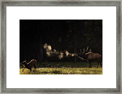 Steamy Breath Elk Bugle Framed Print by Michael Dougherty