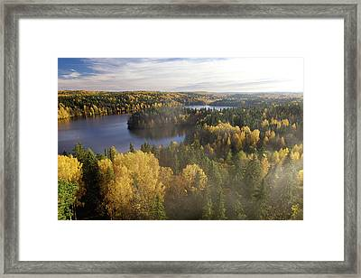 Steamy Forest Framed Print by Teemu Tretjakov