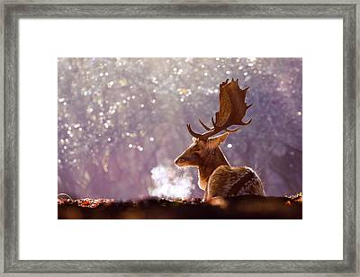 Steamy Stag Framed Print by Roeselien Raimond