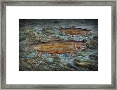 Steelhead Trout Fall Migration Framed Print