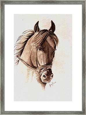 Steely Black Stallion Framed Print by Remy Francis