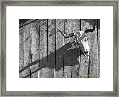 Steer Skull On Barn Framed Print by Richard Singleton